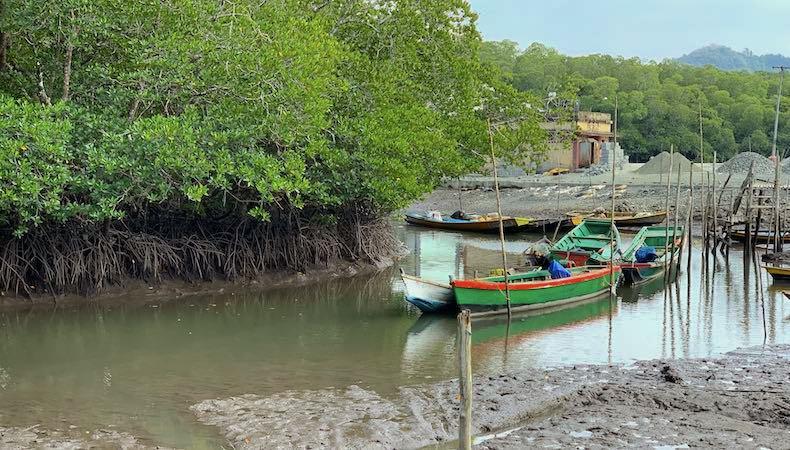 Dhaninallah Mangrove Walkway