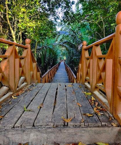 dhanni-nalah-mangrove-walkway-middle-andaman.jpg
