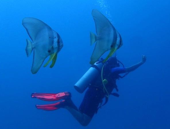 2 Days PADI Scuba Diver certification course