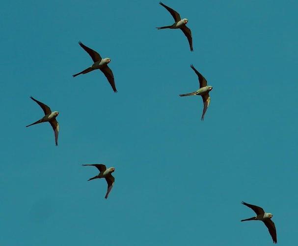 parrot-island-andaman-islands.jpg