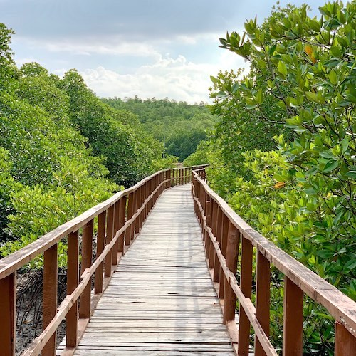 Local Sightseeing To Ambkunj Beach, Morrice Dera and Mangrove Walkway