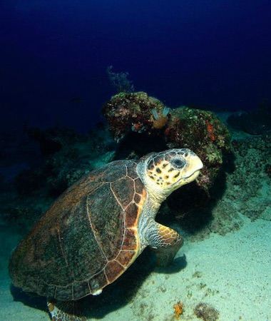 Andaman Explorers with Turtle Nesting