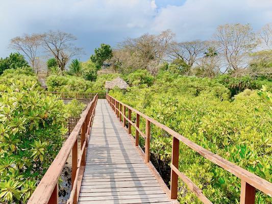 Local Sightseeing To Ambkunj Beach, Morrice Dera and Mangrove Walkway